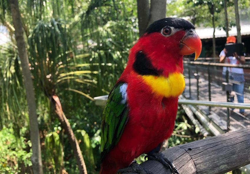 Jurong bird park - Singapore